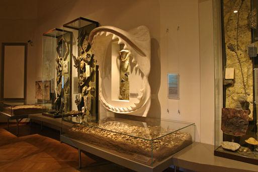 Museum für Naturkunde Stadtökologie02
