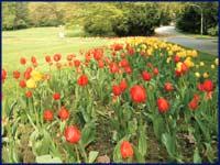 Tulpenfest im Elbauenpark, ©MVGM