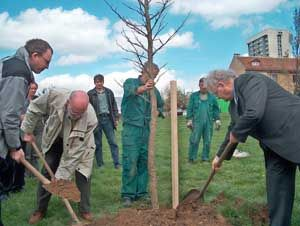 Gemeinsames Pflanzen des Baumes des Friedens