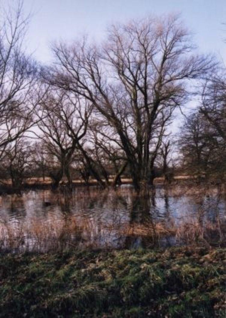 Hochwasser in der Kreuzhorst, eine Eiche steht mit ihren Wurzeln im Wasser, eine Winteraufnahme, Baum ist kahl
