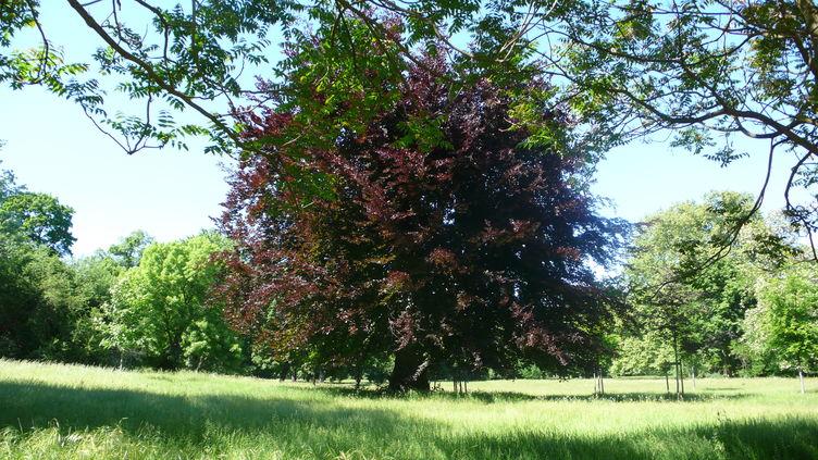 Interner Link: aktuelle Baumf�llarbeiten SFM