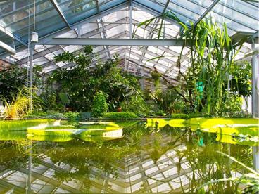 Interner Link: Lernorte Gruson-Gewächshäuser und Botanikschule