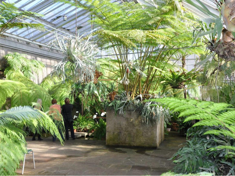 Interner Link: Public guided tour in Gruson greenhouses