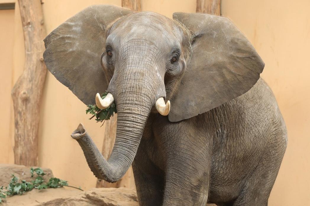 Elefant im Zoo  © Magdeburg Marketing