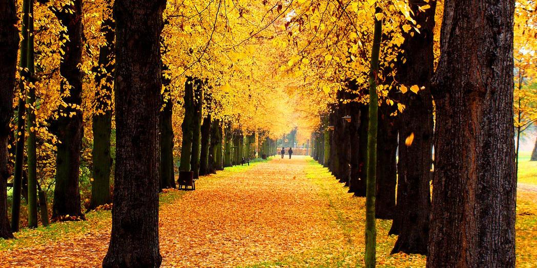 Herbststimmung im Stadtpark©LH Magdeburg (Kl. Peter Hornemann)