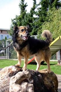 Hund Jerry, männlich, 9 Jahre, Terrier, lebhaft, freundlich, verschmusst