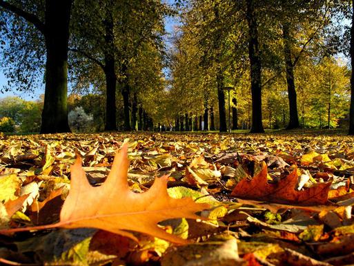 Interner Link: Parks und Gärten