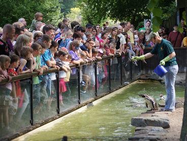 Pinguine © Zoo Magdeburg